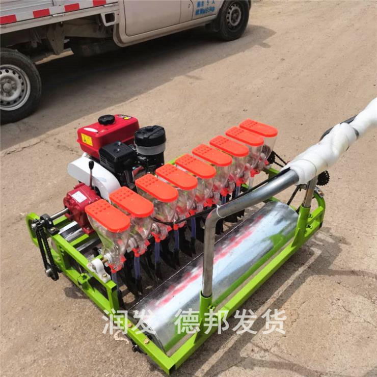 徐州汽油精密蔬菜播种机/小颗粒药材播种机-润发机械
