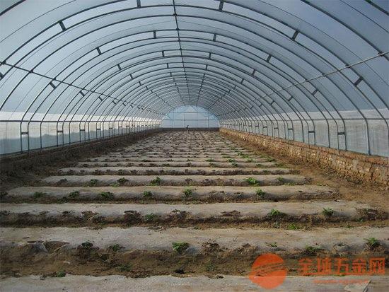 新聞:湛江市25x50大棚骨架