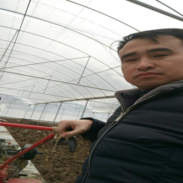 青神县龙虾大棚管 对虾大棚钢管温室技术