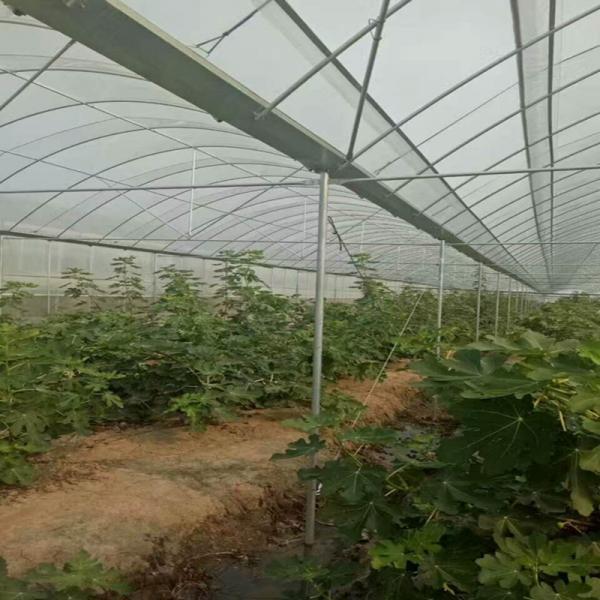 忻州保德县大棚管6米跨度 50米长度大棚钢管用料完工