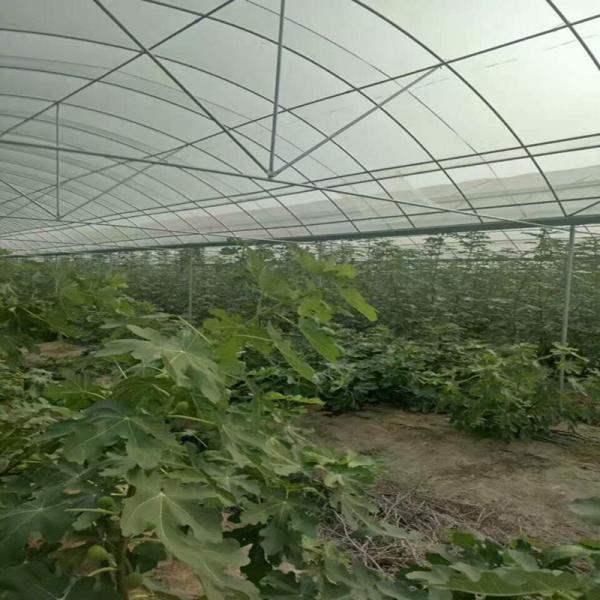 徐州豐縣連體大棚一畝多少錢生產加工