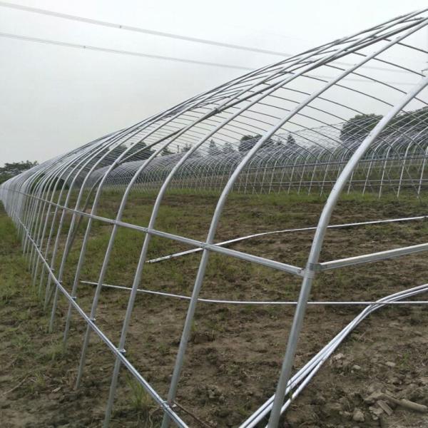 徐州泉山連棟大棚4米開間專注溫室工程