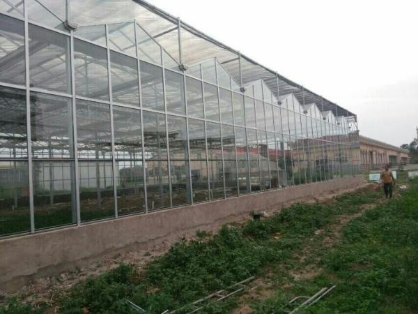 忻州静乐县蔬菜大棚 果树大棚管新型设计合作