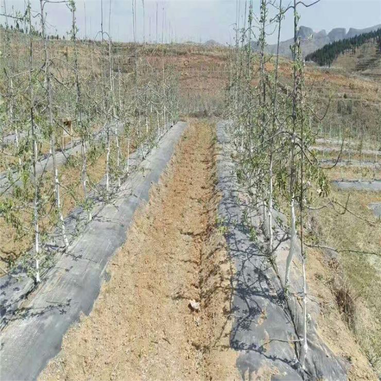 80公分寬防草布價格 果園鋪蓋透水保濕