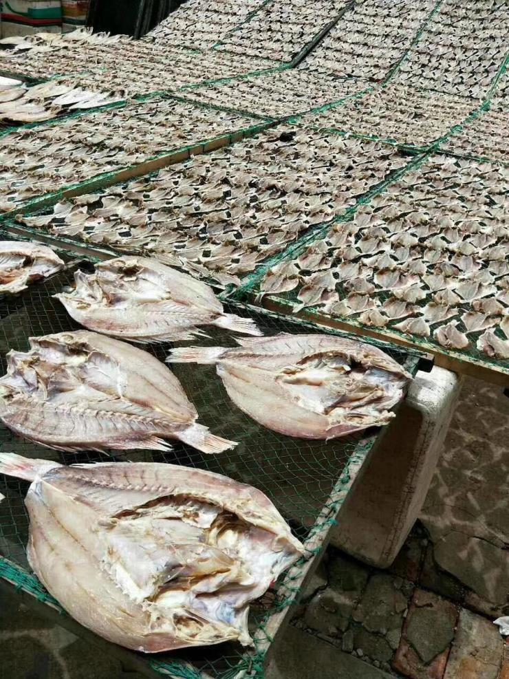 黄花鱼干燥设备-黄花鱼烘干机-黄花鱼烘干