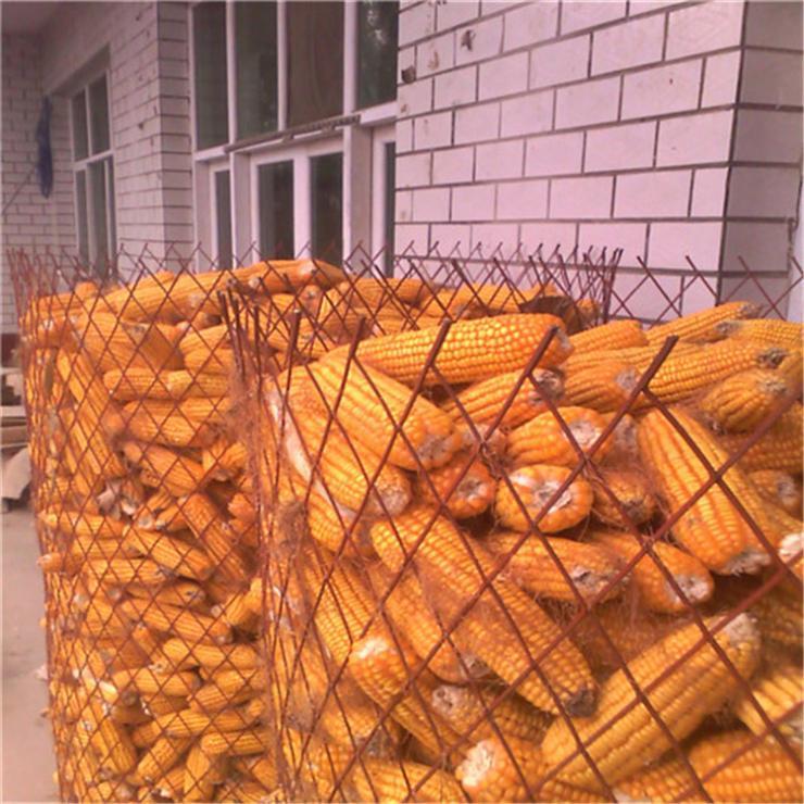 圈玉米钢板网 宁晋防锈漆菱形网 万泰钢板现货