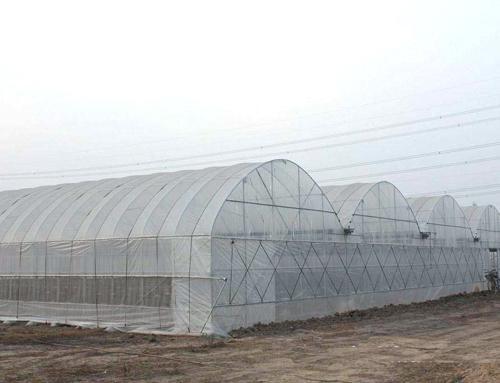 新闻:湖南永州连栋大棚管湖南永州台州定尺蔬菜大棚管