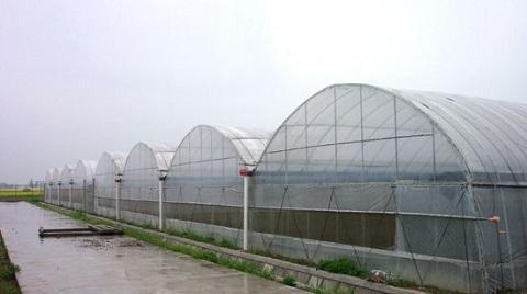 新闻:河北省大棚管河北省连体大棚管河北省金州牌玻璃连栋