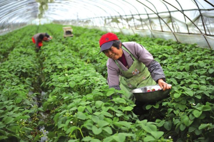 新闻:云阳县大棚管云阳县国强牌牛头牌大棚管拱管草莓棚4分-8寸