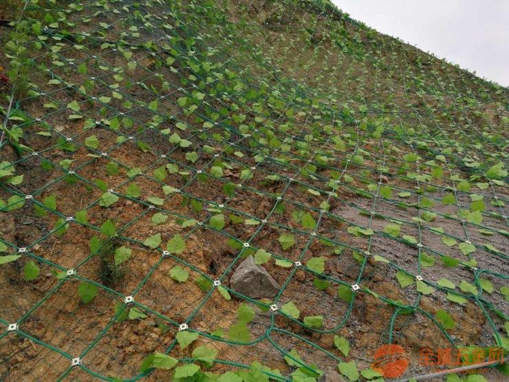 福建边坡落石防护网厂家/优质边坡落石防护网价格