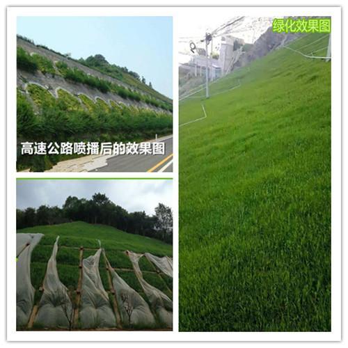 河南鄭州液壓草籽噴播機——斜坡掛網綠化