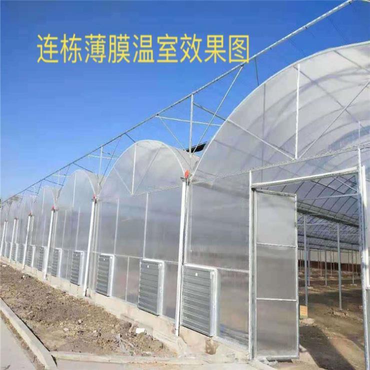 连栋薄膜温室 温室制造