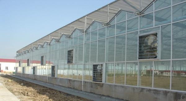 光泽县5跨8米连栋大棚多少钱按地形设计定制
