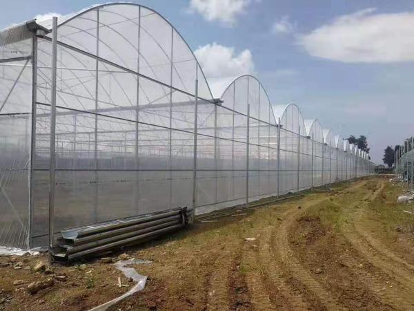 庐山区大棚管一支多少钱 大棚管多少钱一亩温室技术