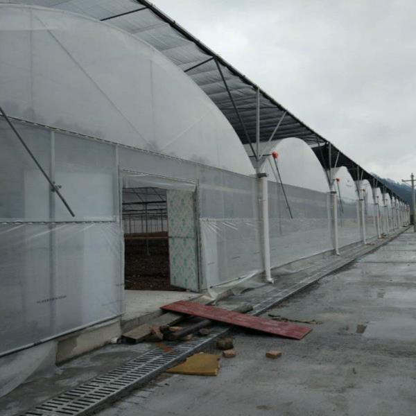 衡山县葡萄连体大棚管厂多少钱