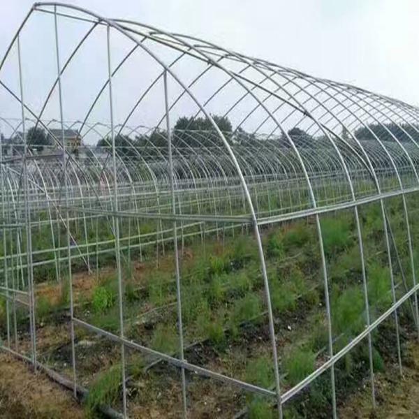 乐平芦蒿单体大棚 单体蔬菜大棚造价更低