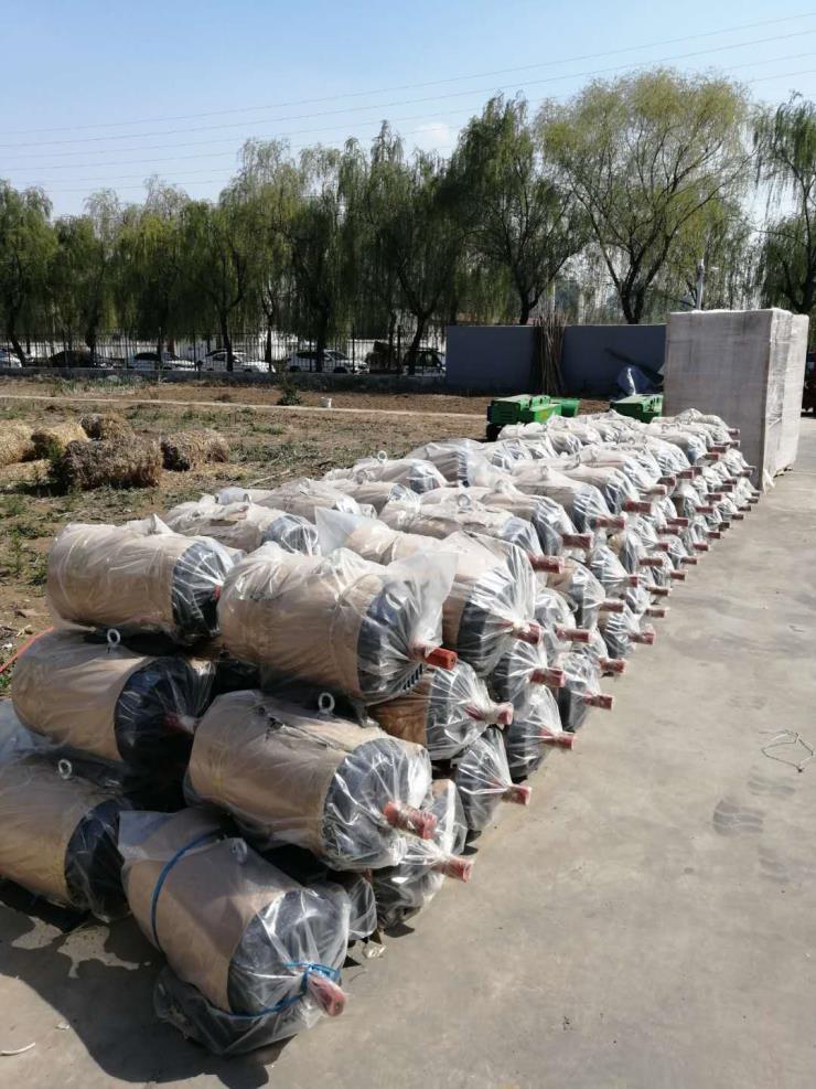泸州三相电青贮打捆机工作视频