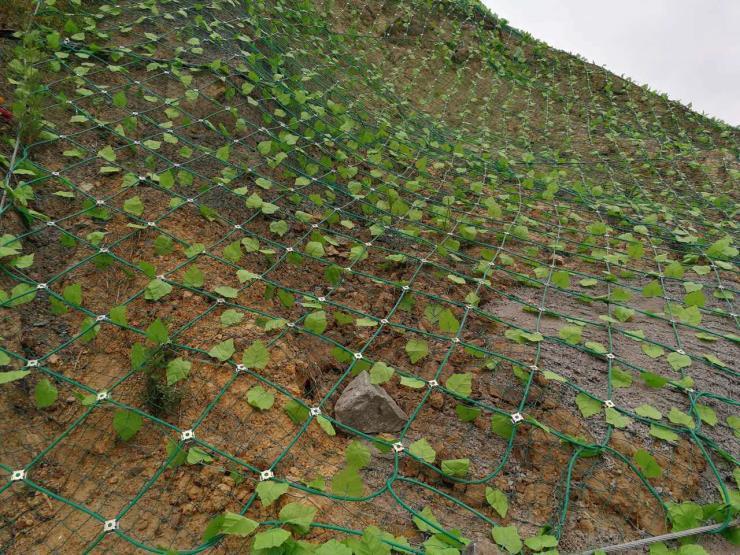 泉州客土喷播铁丝网品牌厂家边坡绿化网