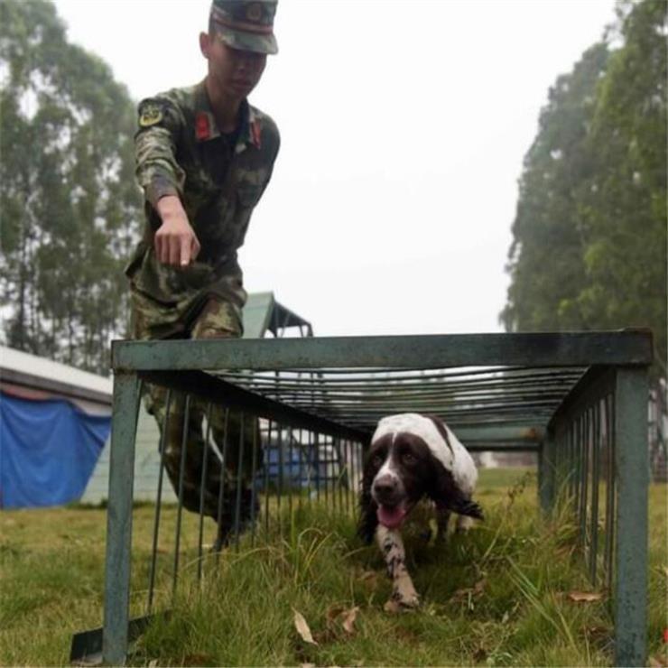 北京户外警犬障碍训练器材设备工厂加工生产