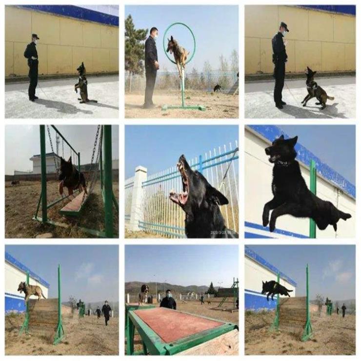 达创体育特警队搜救犬障碍设施