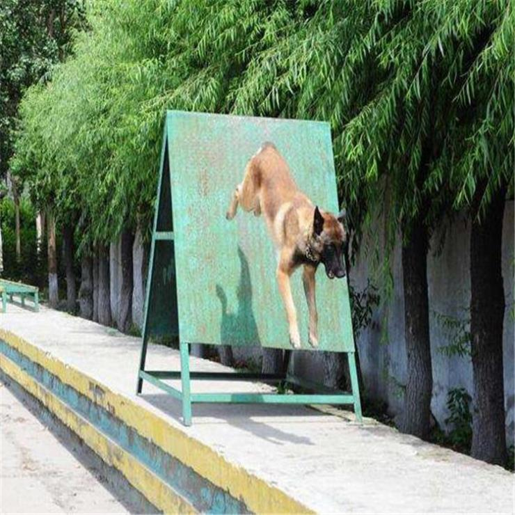 天津户外组织开展警犬训练器材批发可定制尺寸规格
